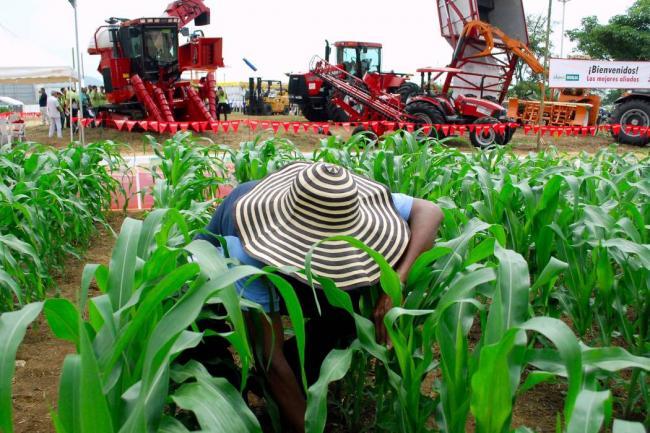 10 apuestas del agro para 2020