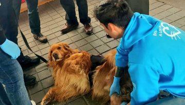 Denuncian graves condiciones de los perros antiexplosivos de Transmilenio