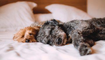 Cuatro actividades para hacer con su mascota durante el aislamiento