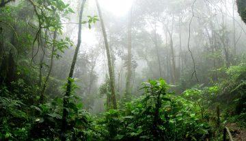 Deforestación en la Amazonía y sus implicaciones económicas