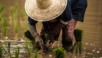 Dotarán de créditos a miles de pequeños y medianos agricultores