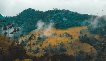 ¿Por qué Colombia no ha logrado preservar su biodiversidad?