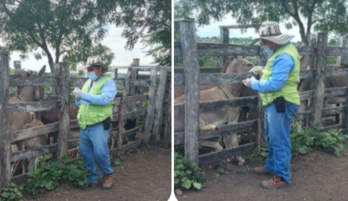 Departamento del Magdalena continúa blindándose contra la encefalitis equina venezolana